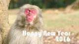 謹賀新年〜2015振り返り〜